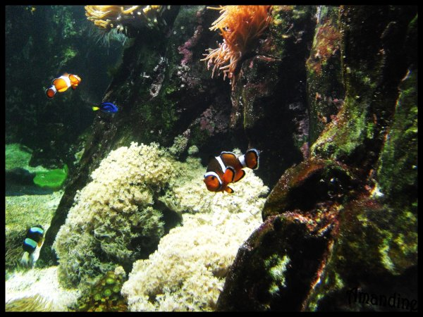 Photographie : Aquarium