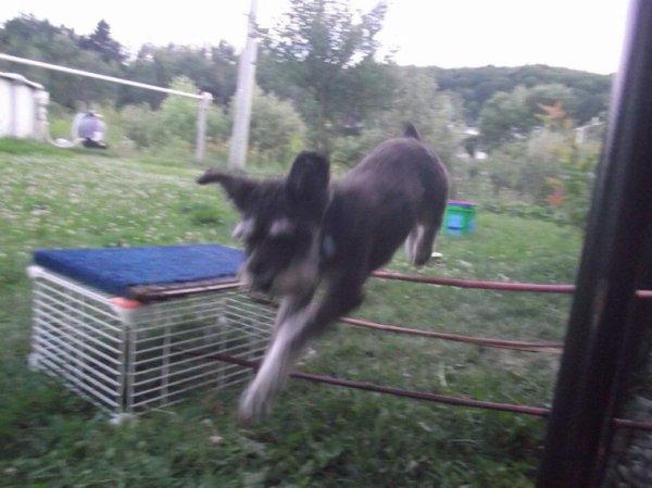 Éragone fait du saut d'obstacles (je lui est appris)