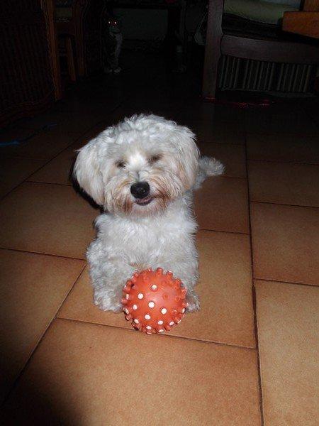 Qui veut jouer à la balle avec Penny ?