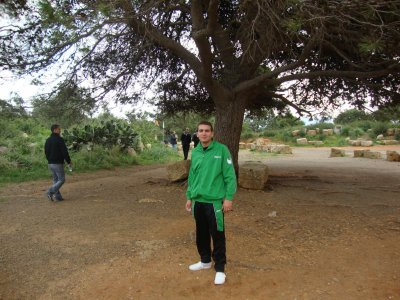 sous un immense arbre