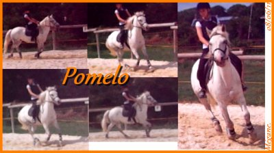 Pomelo ♥