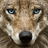 Photo de pour-un-loup