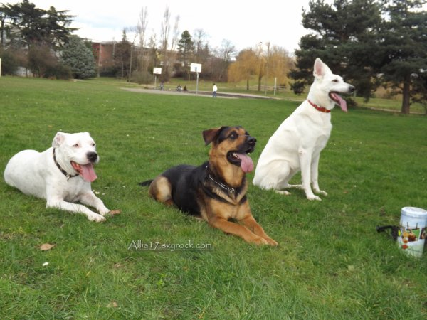 Allia, Daisy et Tina