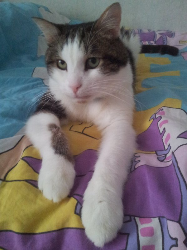 Paske jveux l'honneur. wlh c'est mon chat.