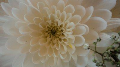 Encore et encore des fleurs. :D