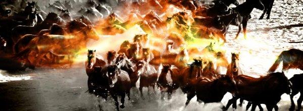 Le comportement du cheval à l'état sauvage