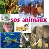 fashion-sos-animaux