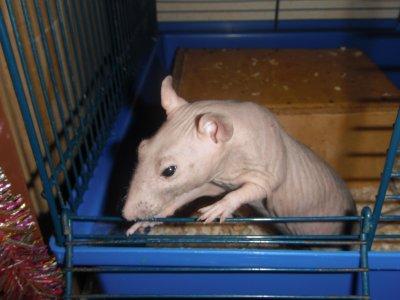Bobby décédé en juin 2011