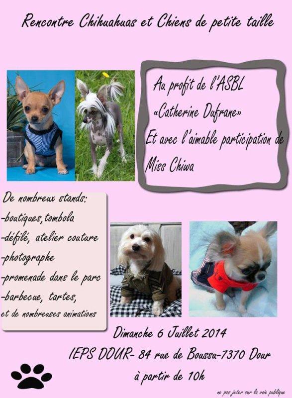 Rencontre chihuahua dimanche 6 juillet à DOUR