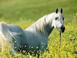 moi & les chevaux