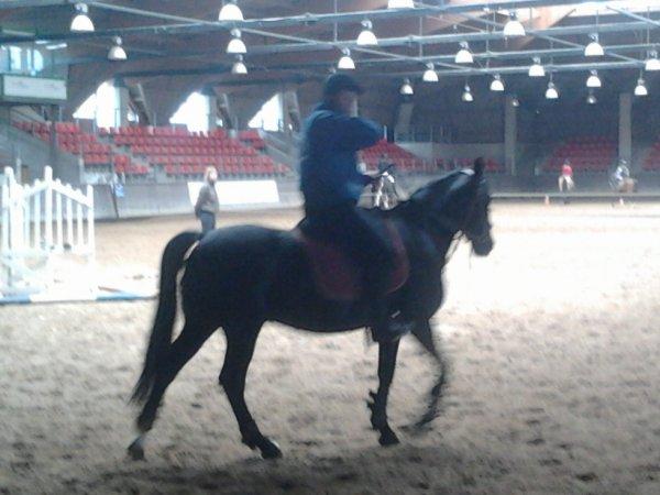 Or Noir juste le plus beau des chevaux