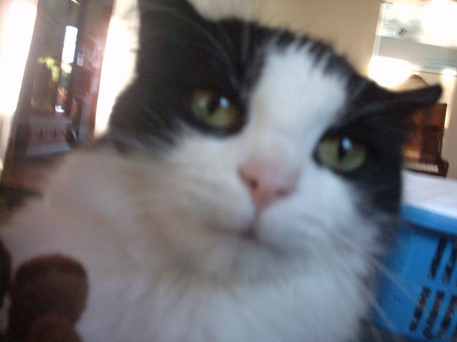 mon chat !
