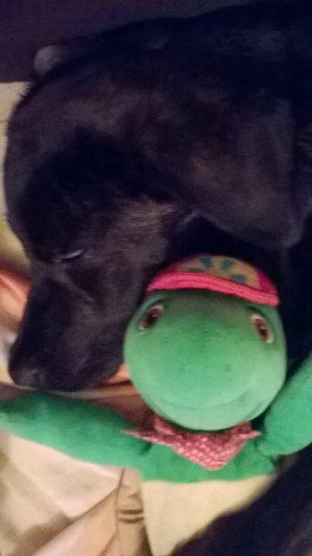 mon bibou et son doudou