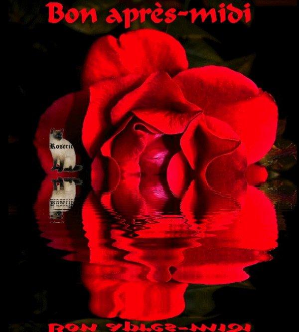 Dites Le Avec Une Rose, Bonne Après Midi. Bisoussssssss