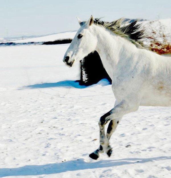 """""""Retirer un cheval à son cavalier, c'est lui enlever son coeur et son sang en même temps."""""""