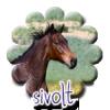 Sivolt