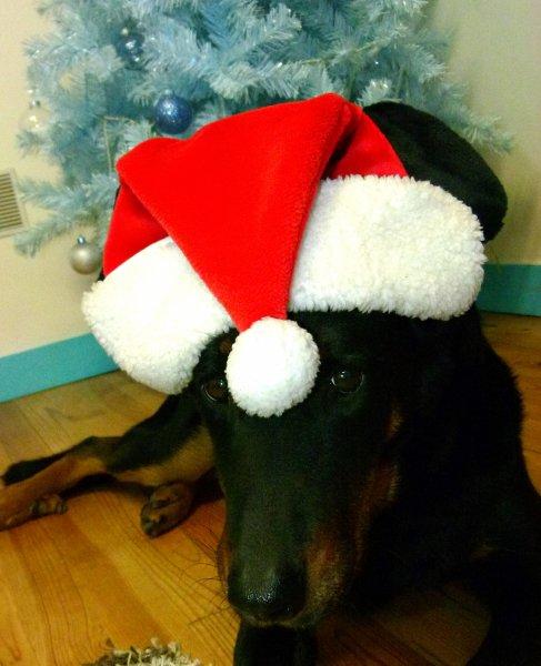 Vicky vous souhaite aussi un Joyeux Noel !!!