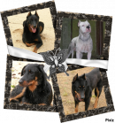 Photo de beauceron03