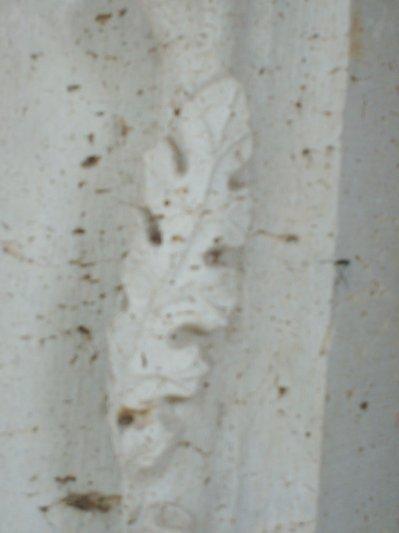 Détail 1 : Une feuille de chêne