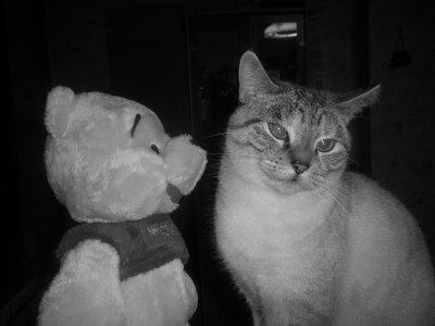 . Un animal de compagnie , Un Tout ! .