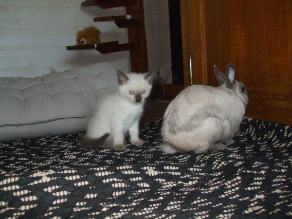 mon petit chat et mon lapinouuuuuuuu ♥♥