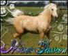 xxxspecial-horsesxxx