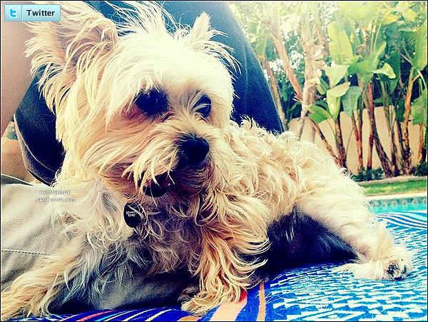 - Miley a posté une nouvelle photo de son chien, Lila sur son compte Twitter.-