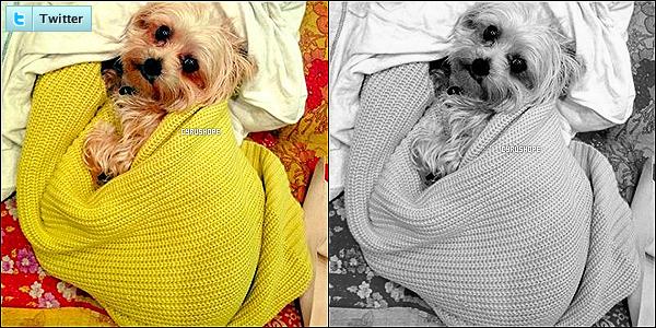 - Miley Cyrus a posté une photo de son fidèle chien, Lila sur son compte Twitter !-