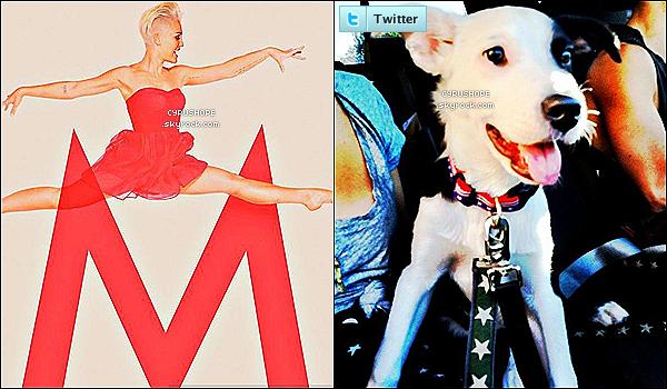 . • Découvrez (au complet) la bande originiale du long-mètrage « So Undercover ».+ Nouvelle photo du shooting pour MileyCyrus.com ainsi que la photo du nouveau chien de Miley, Gnarly Stone Krull !.