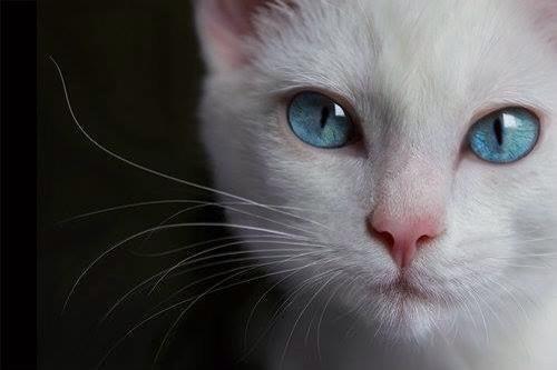 La souris est un animal qui, tué en quantité suffisante et dans des conditions contrôlées, produit une thèse de doctorat.