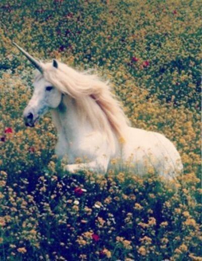 I'm a unicorn :)
