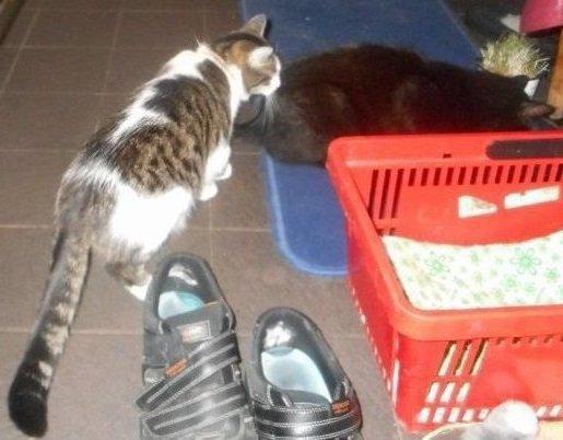 Hommage as mais chat vivant