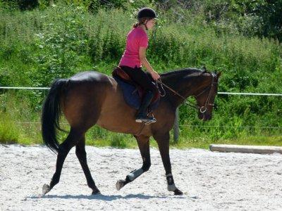 """"""" L'air du paradis est celui qui souffle entre les oreilles d'un cheval. """" ಇ"""