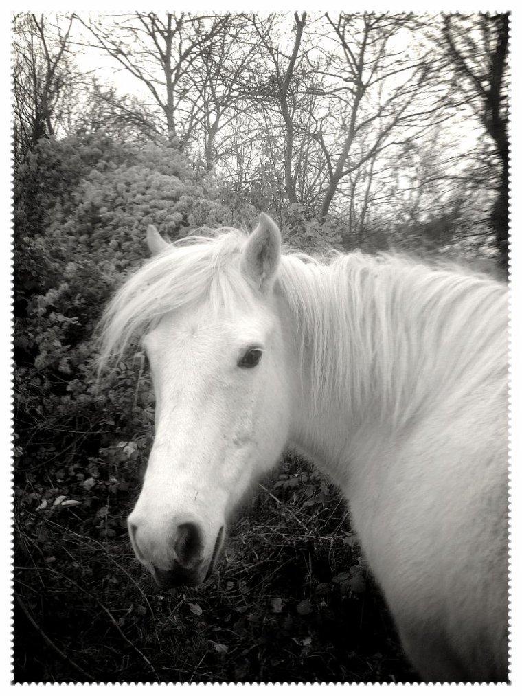 Le cheval n est il pas la muse du poete !