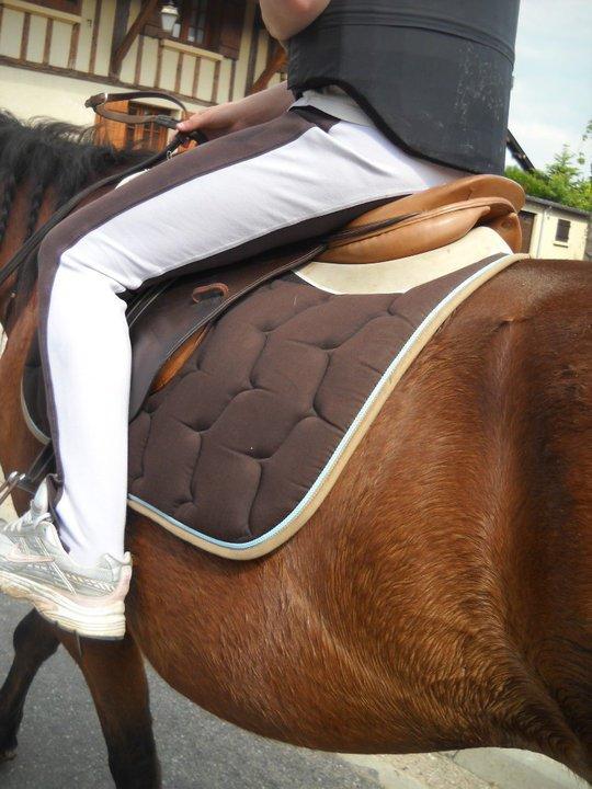 L'équitation mon bonheur au quotidien