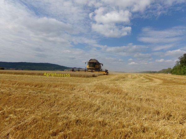 La Cr 980 se regalant dans le blé .