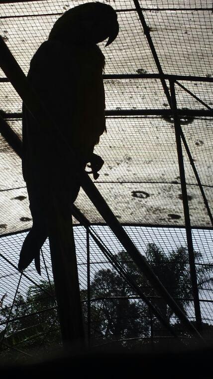 Jardin aux oiseaux tropicaux