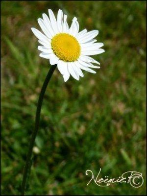 • ● Flower ● •