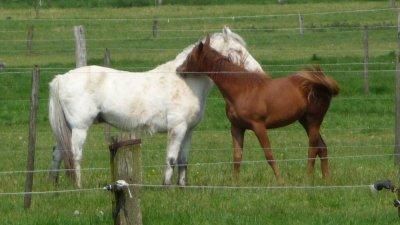 retour en pature pour les chevaux