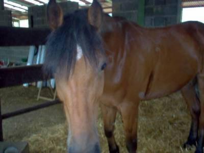 Association Equestre de Mairy