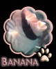 TropicalxBanana