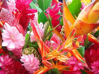Les fleurs de tahiti