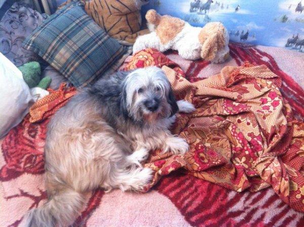 c'est mon chien  c est pacha que j aime!!!!!!!