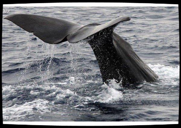 Le Saint-Siège se préoccupe de la protection des océans
