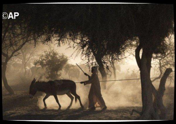 La Fondation Jean-Paul II pour le Sahel ½uvre contre la désertification