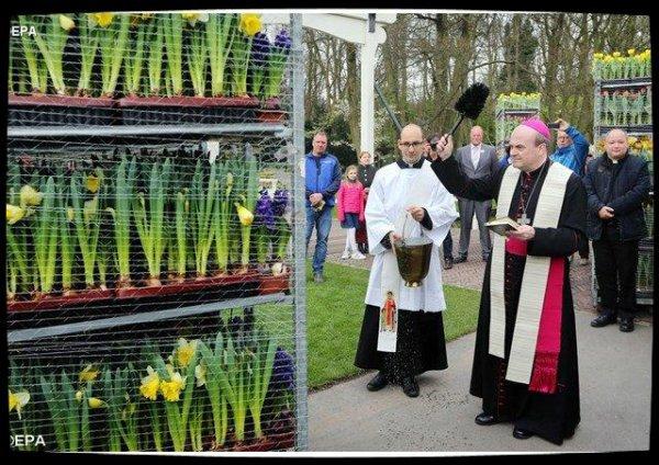 35.000 fleurs et plantes des Pays-Bas pour décorer la place Saint-Pierre