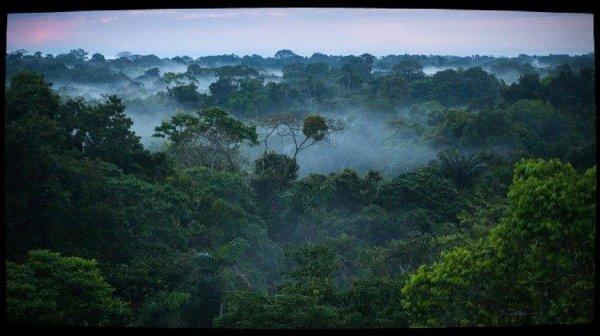 Venezuela: le Repam et l'épiscopat dénoncent les excès de l'exploitation minière en Amazonie
