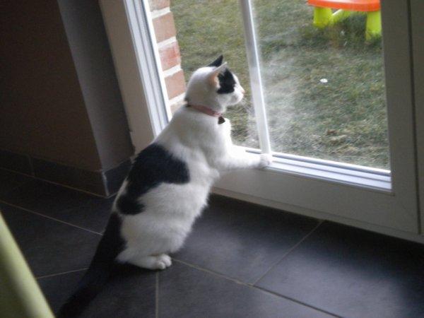wiski qui essaie d'attraper les poules dans le jardin mais avec la fenetre sa va etre dificile ;-)