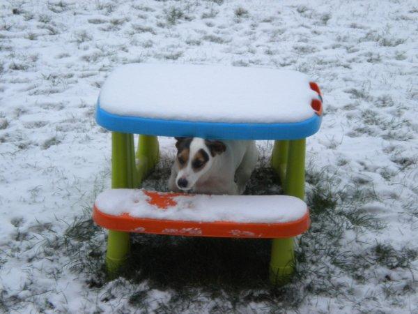 pirate dans la neige