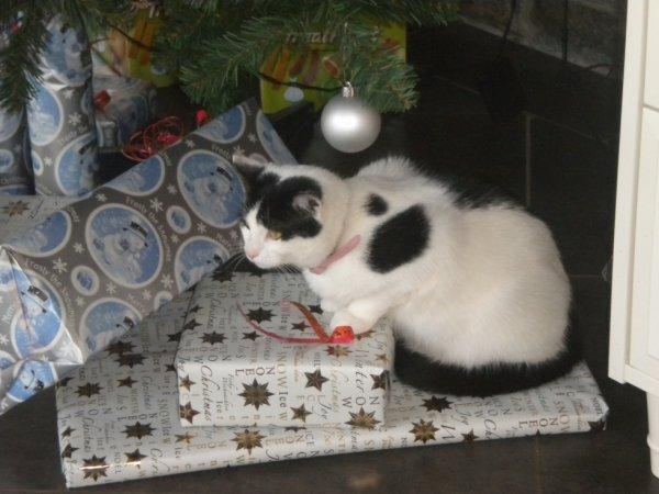 wisky etait préssée d'ouvrire les cadeaux a noel petite chipie